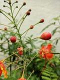 Germogli di fiore Fotografia Stock Libera da Diritti