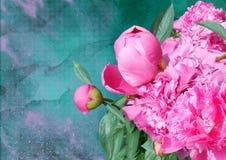 Germogli di fiore della peonia su un fondo dipinto Fotografia Stock