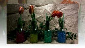 Germogli di fiore rossi di fioritura dei tulipani video d archivio