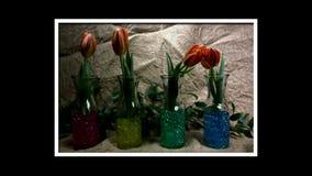 Germogli di fiore rossi di fioritura dei tulipani stock footage