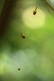 Germogli di fiore secchi che cadono dall'albero Immagine Stock