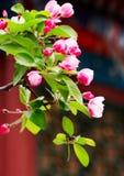 Germogli di fiori in primavera fotografia stock libera da diritti