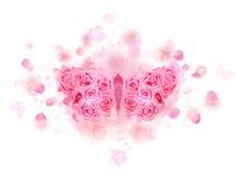Germogli di rosa della farfalla di colore rosa Immagini Stock