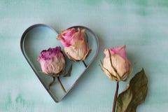 Germogli di rosa di colore rosa Fotografia Stock Libera da Diritti
