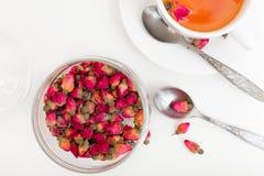 Germogli di rosa secchi Fotografia Stock Libera da Diritti