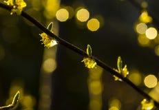 Germogli e goccioline della pioggia fotografia stock libera da diritti