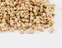 Germogli e un grano saraceno molto utile fotografia stock libera da diritti