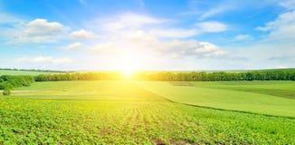 Germogli ed alba del girasole di Feld sul cielo Ampia foto Immagine Stock Libera da Diritti