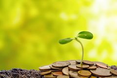 Germogli la crescita dal suolo con le monete dei soldi su natur verde vago Fotografia Stock