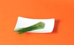 Germogli organici del frumento Fotografia Stock