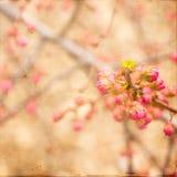 Germogli rosa artistici della primavera Fotografie Stock