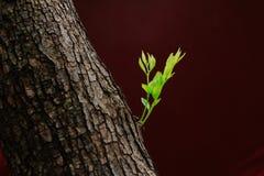 Germogli sull'albero Fotografia Stock Libera da Diritti