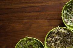 Germogli sulla tavola di legno Immagine Stock