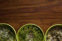 Germogli sulla tavola di legno Immagini Stock