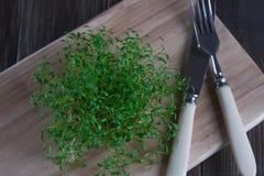 Germogliare fresco del crescione pronto per insalata fotografia stock libera da diritti