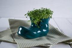 Germogliare fresco del crescione pronto per insalata Alimento vegetariano sano Immagini Stock Libere da Diritti