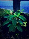 Germogliare natura Fotografia Stock