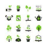 Germoglio dell'albero ed icone di vettore delle piante Piantina e mano che piantano i pittogrammi royalty illustrazione gratis