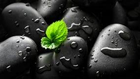Germoglio della pianta in ciottoli Immagini Stock Libere da Diritti