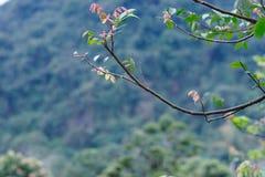Germoglio della primavera Fotografie Stock Libere da Diritti