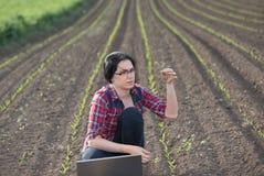Germoglio della tenuta della donna dell'agricoltore nel campo Fotografia Stock