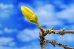 Germoglio di fiore Fotografie Stock Libere da Diritti