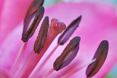 Germoglio di fiore Fotografie Stock