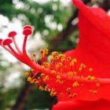 Germoglio di fiore Immagini Stock Libere da Diritti
