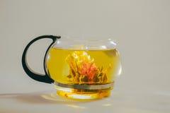 Germoglio di fiore cinese verde del tè che fiorisce in teiera di vetro Su fondo bianco Immagini Stock