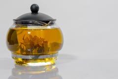 Germoglio di fiore cinese verde del tè che fiorisce in teiera di vetro Su fondo bianco Fotografie Stock Libere da Diritti