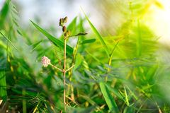 Germoglio di fiore con la foglia verde Fotografia Stock Libera da Diritti