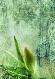 Germoglio di fiore sui precedenti floreali Immagini Stock Libere da Diritti