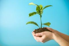 Germoglio di nuovo albero verde in suolo in mani umane su fondo blu Concetto di protezione dell'ambiente Giorno di terra immagine stock libera da diritti