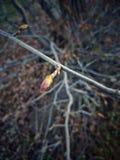 Germoglio di un albero in primavera Fotografia Stock Libera da Diritti