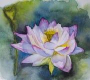 Germoglio rosa del loto del fondo dell'acquerello il bello fiorisce illustrazione disegnata a mano dell'acquerello royalty illustrazione gratis