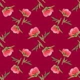 Germoglio rosa della peonia su fondo vinoso Modello senza cuciture dell'acquerello Immagini Stock