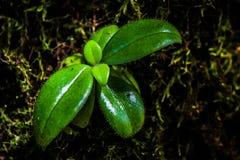 Germoglio verde Fotografia Stock