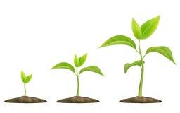 Germoglio verde crescente illustrazione di stock