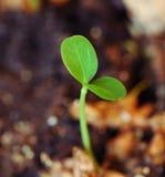 Germoglio verde, nuova vita Fotografie Stock Libere da Diritti