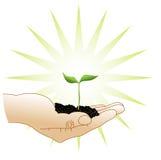 Germoglio verde in una mano Immagini Stock Libere da Diritti