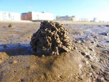 Gerold gegoten van zeepier op strand royalty-vrije stock afbeelding