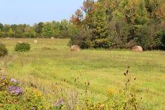 Gerolde hooibalen in in de herfst Stock Foto's