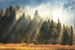 Geroldsee forest during autumn day, Bavarian Alps, Bavaria, Germany. royalty free stock image