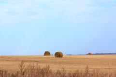 Gerollt in Zylindereinstaplung Stroh auf einem geernteten Feld, Bäume Stockfotografie