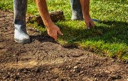 Gerollte Grasscholle für neuen Rasen stockbilder