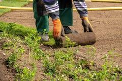 Gerollter Rasen wird auf ein Firmengel?nde gelegt lizenzfreie stockfotos