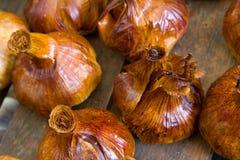 Gerookte garlics Stock Afbeeldingen