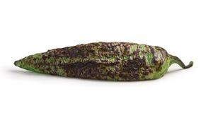 Geroosterd broedsel groen Chili, wegen Stock Foto's