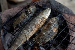 Geroosterd vissen Thais voedsel Royalty-vrije Stock Afbeelding