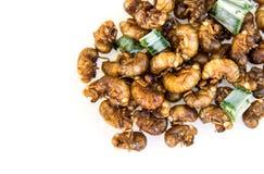 Geroosterde cicadelarve royalty-vrije stock foto's